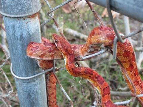Can A Fence Keep Out Snakes 4